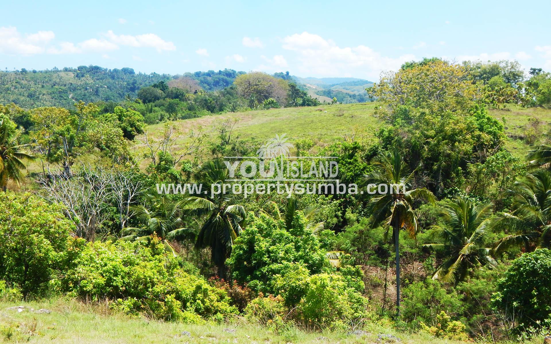 Property Sumba Dangla Rada 523 3057m2 1