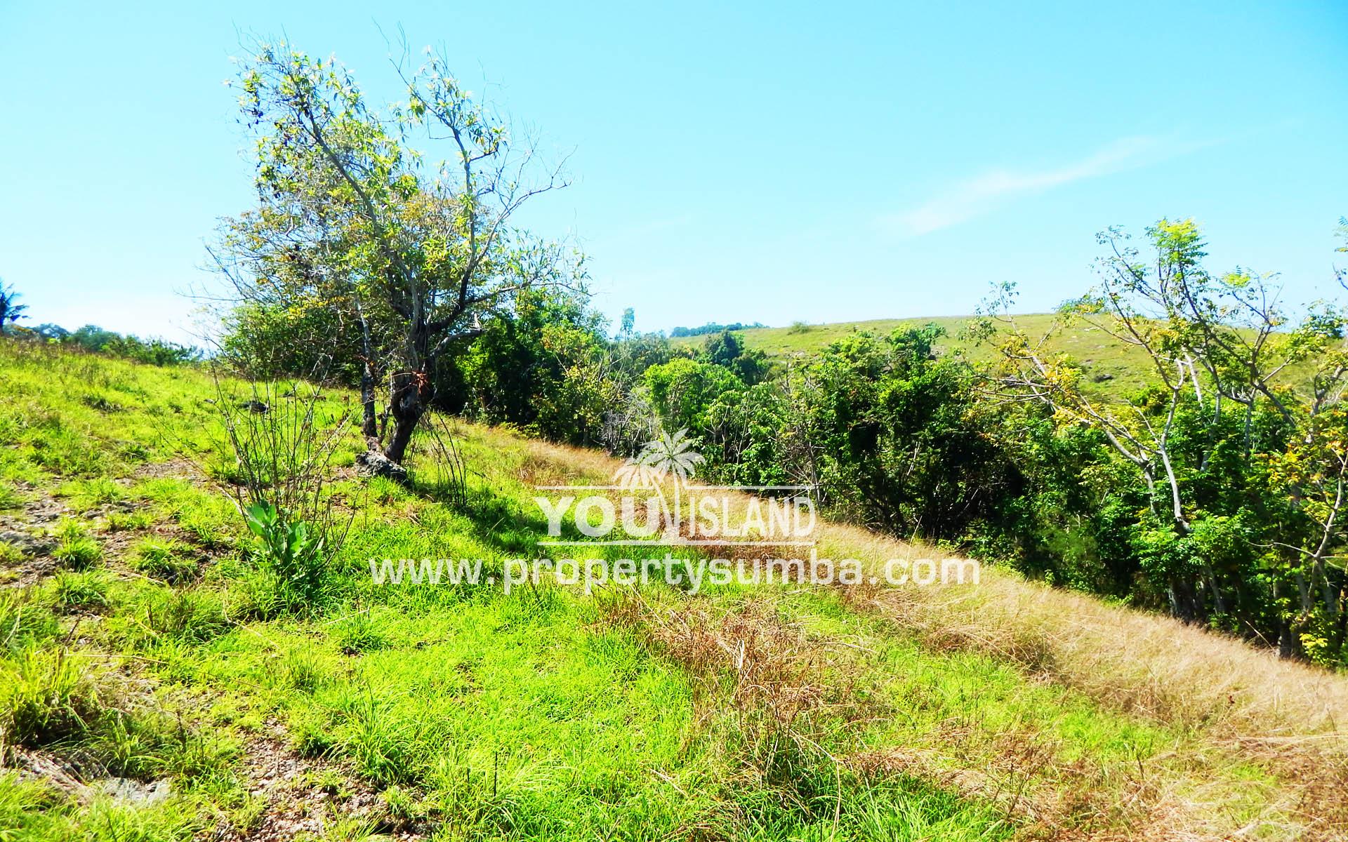 Property Sumba Dangla Rada 523 3057m2 5