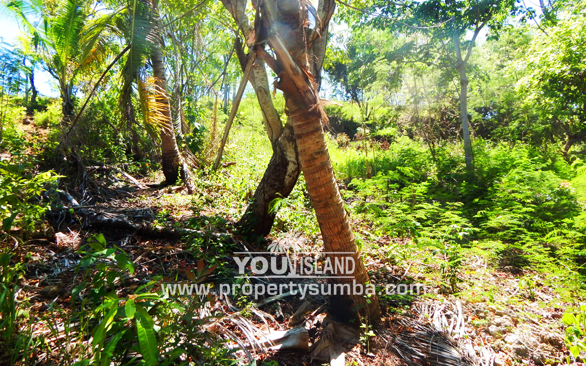 Property Sumba Dangla Rada 523 3057m2 6