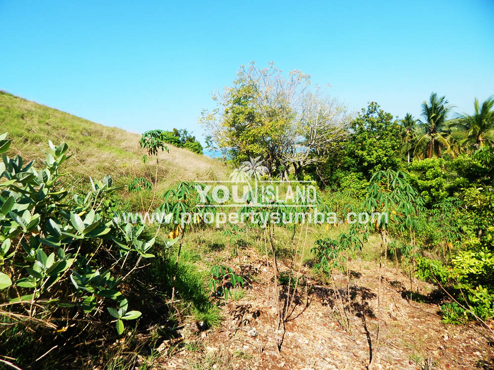 Property Sumba Kedu Lere 532 2884m2 3