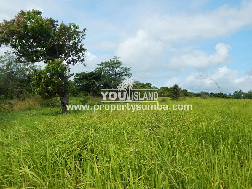 Land 27 Tanamete 10000 M2 3