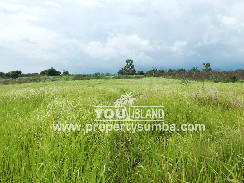 Land 27 Tanamete 10000 M2 5