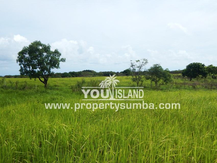 Land 27 Tanamete 10000 M2 6