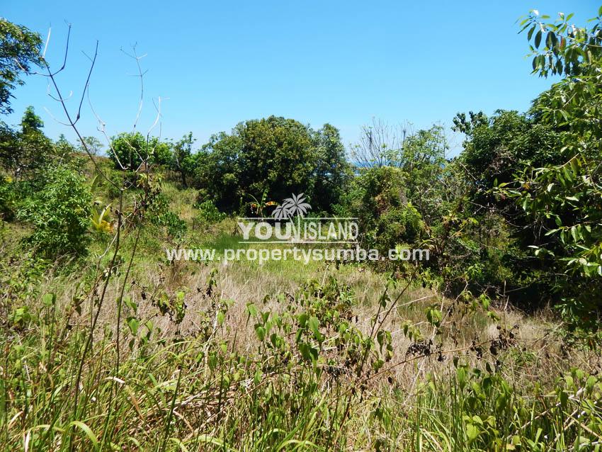 Land 35 Harona Kalla 16863 M2 2