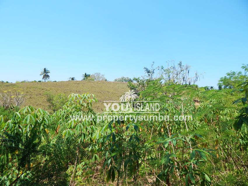 Land 37 Loku Kumha 8490 M2 2