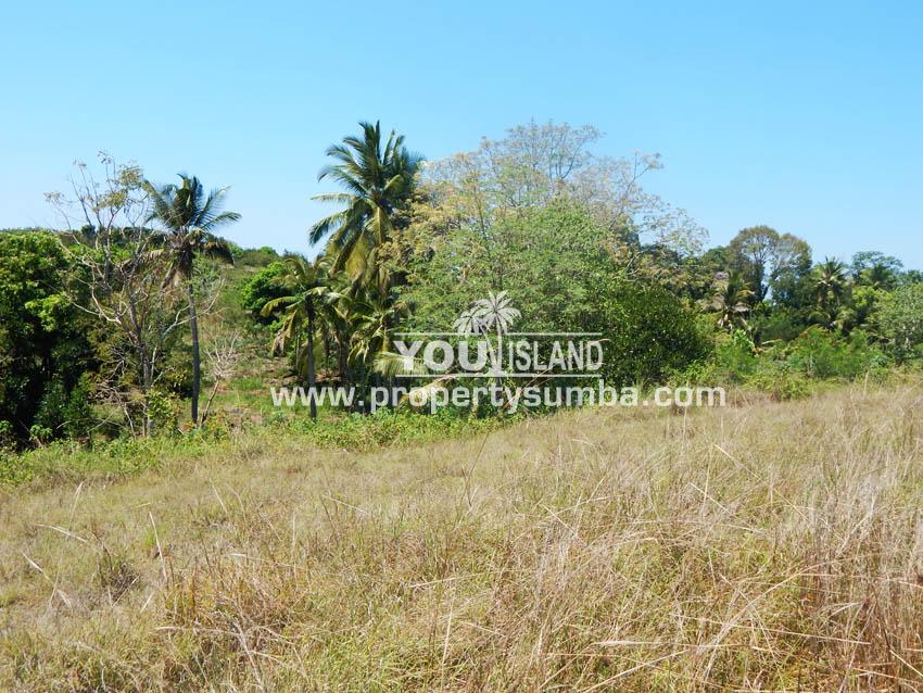 Land 37 Loku Kumha 8490 M2 6