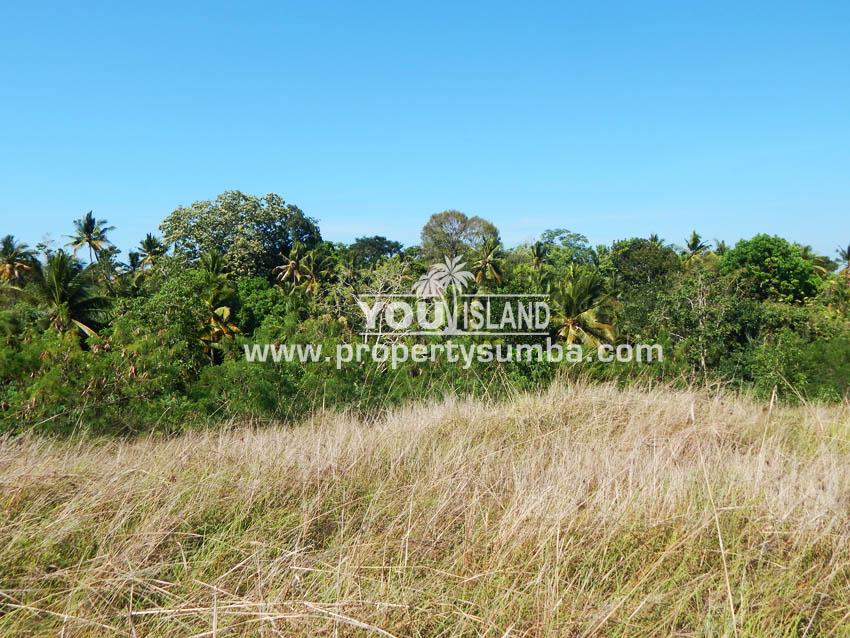 Land 37 Loku Kumha 8490 M2 8
