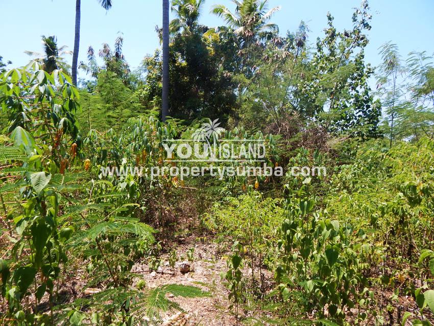 Land 40 Weluri Kala 3866 M2 1