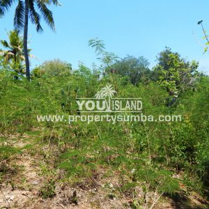 Land 40 Weluri Kala 3866 M2 2