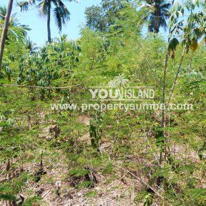 Land 40 Weluri Kala 3866 M2 3