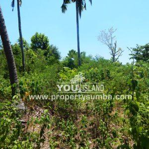 Land 40 Weluri Kala 3866 M2 4