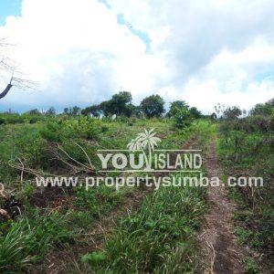 Land 29 Wainyapu 46190m2 13