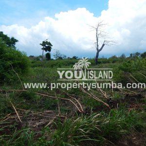 Land 29 Wainyapu 46190m2 14