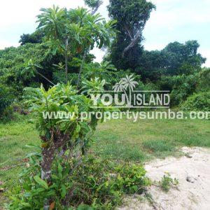 Land 29 Wainyapu 46190m2 7