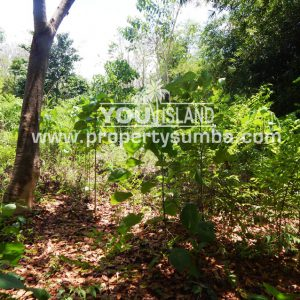 Land 30 Wainyapu 4022m2 1