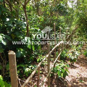 Land 30 Wainyapu 4022m2 5
