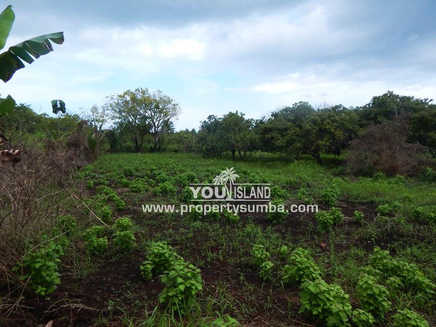 Land 31 Wainyapu 32060m2 19