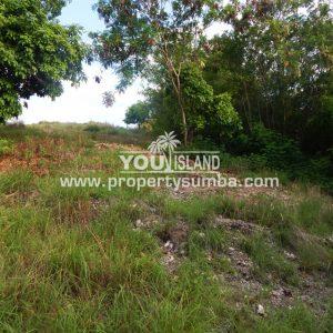 Land 36 Wunta Paweru 10500 M2 1
