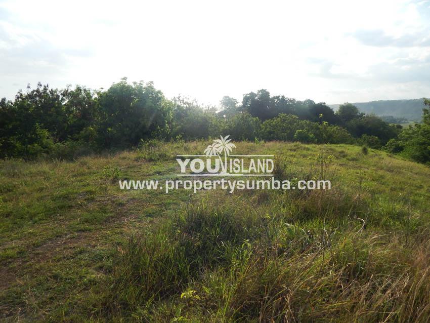Land 36 Wunta Paweru 10500 M2 11