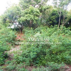 Land 36 Wunta Paweru 10500 M2 2