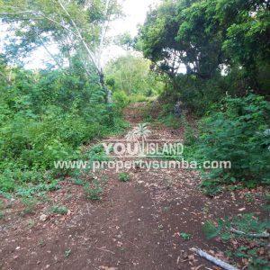 Land 36 Wunta Paweru 10500 M2 3