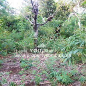 Land 36 Wunta Paweru 10500 M2 4