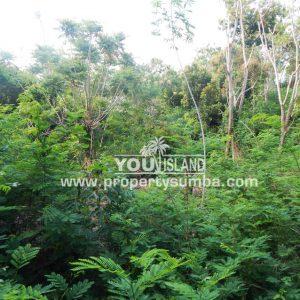 Land 36 Wunta Paweru 10500 M2 5