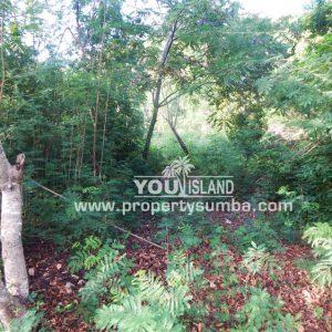 Land 36 Wunta Paweru 10500 M2 6