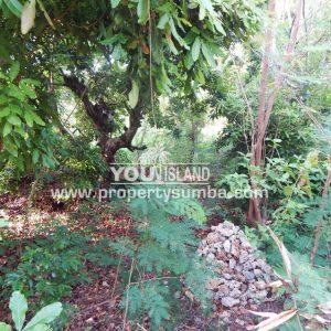 Land 36 Wunta Paweru 10500 M2 7