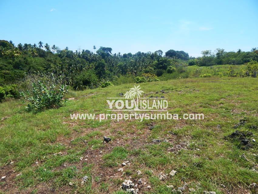 Land 38 Wewuji 9246 M2 1