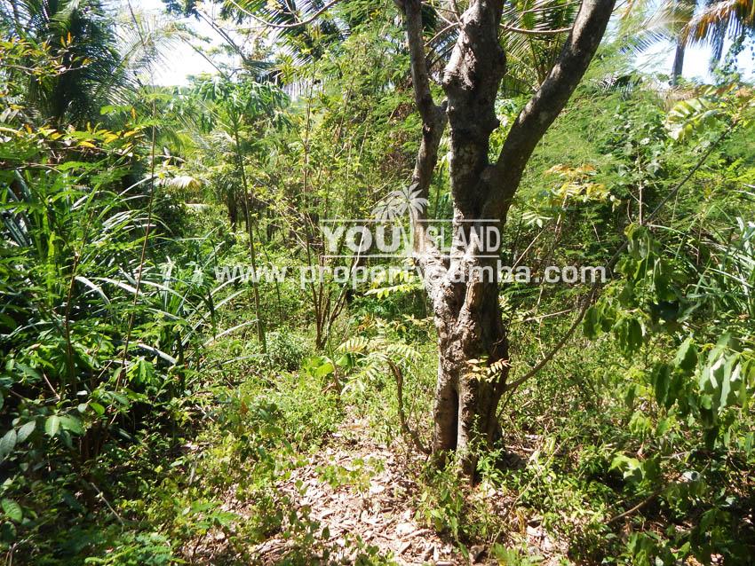 Land 39 Harona Kalla 4841 M2 3