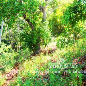 Property Sumba Kedu Lere 532 2884m2 7