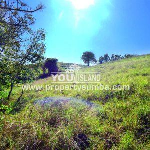 Property Sumba Kedu Lere 532 2884m2 8